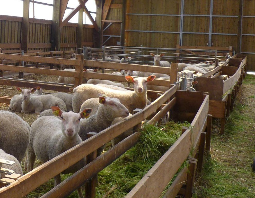 Ovins caprins chambres d 39 agriculture de picardie - Chambre d agriculture de picardie ...